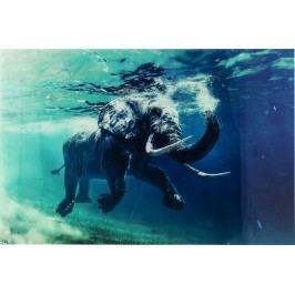 Obraz na skle Swimming Elephant 80X100cm